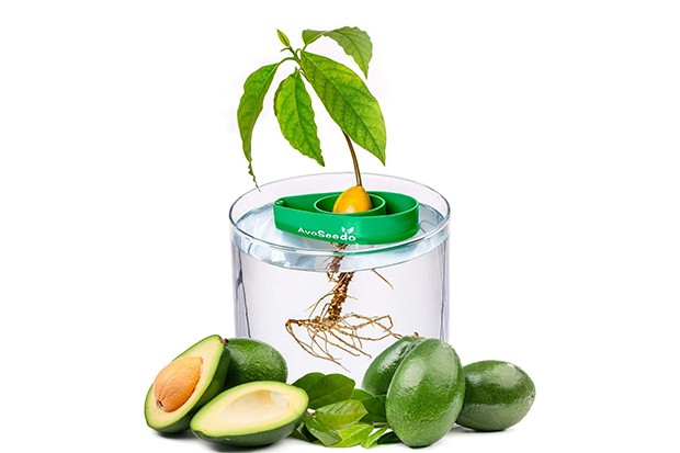 A plastic container with an avocado tree growing out of the top with avocados arranged by the side of it