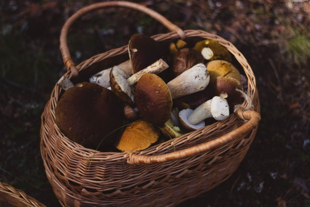 A basket of foraged mushrooms at the School of Artisan Food, Nottinghamshire