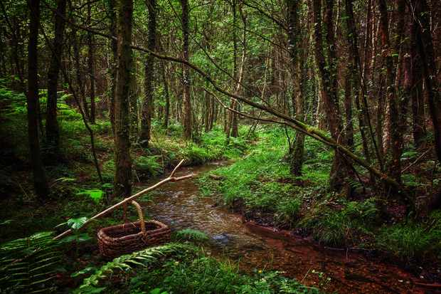 Forests for foraging at The Whitebrook