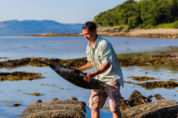 Tristan van Lynden works with his oysters, Otter Ferry