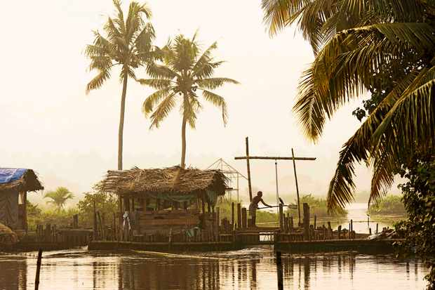 Man on wooden sluice to regulate the water level of the Pokkali rice fields during ebb and flood, backwaters, Ernakulam District, Kerala, India