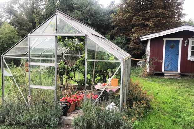 Greenhouse at Hallakra Vingard Sweden
