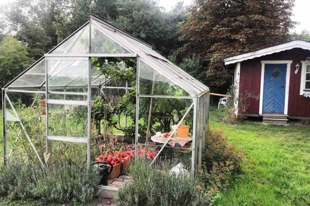 Greenhouse at Hallakra Vingard Sweden
