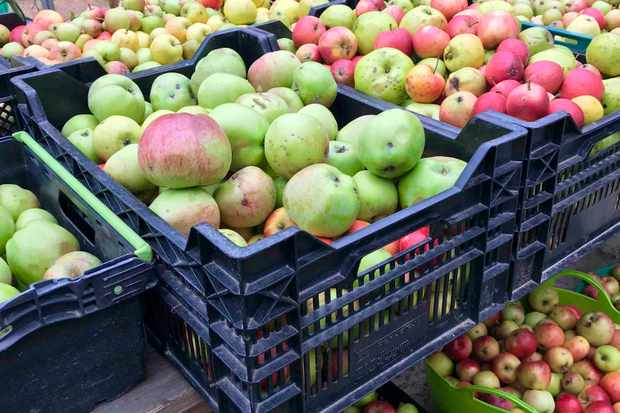 Crates of apples at The Seed Box, Ballogie