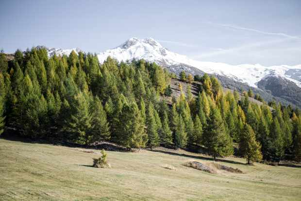 Striking mountains in the background with lush green pine trees in front of the mountains