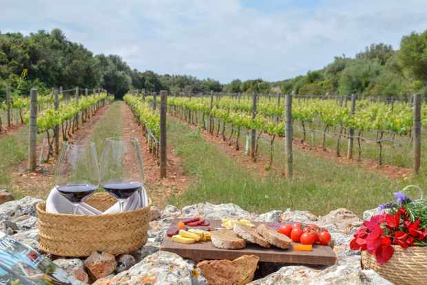 In the backgrounds there are vineyards with grapes growing, and in the foreground is two glasses of red wine and a board topped with cheese, bread and tomatoes