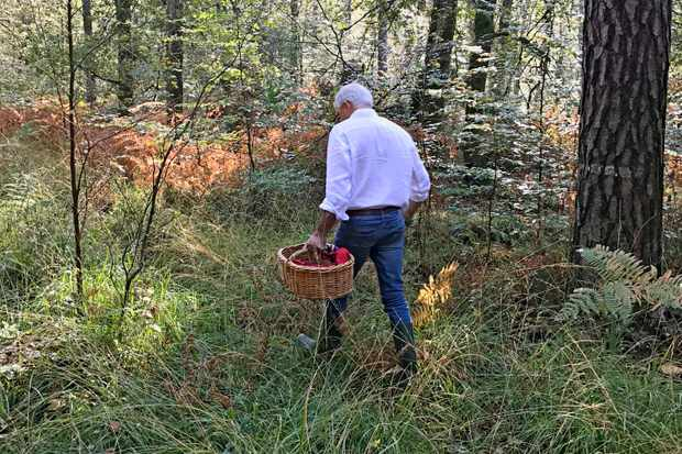 A man is carrying a wicket basket through a field as he forages for mushrooms in Normandy, France