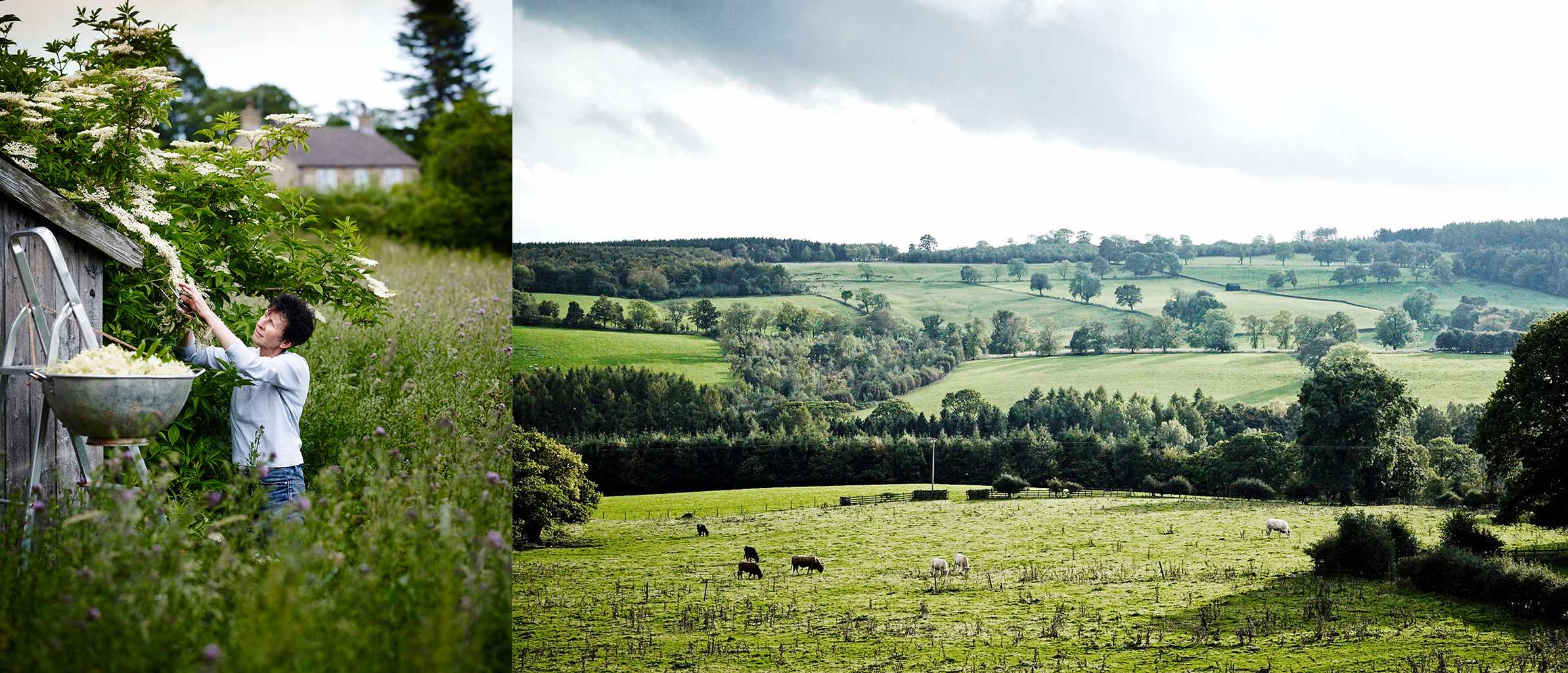 Two images, one is of rolling fields in Yorkshire and the other is a woman picking fruit in a field