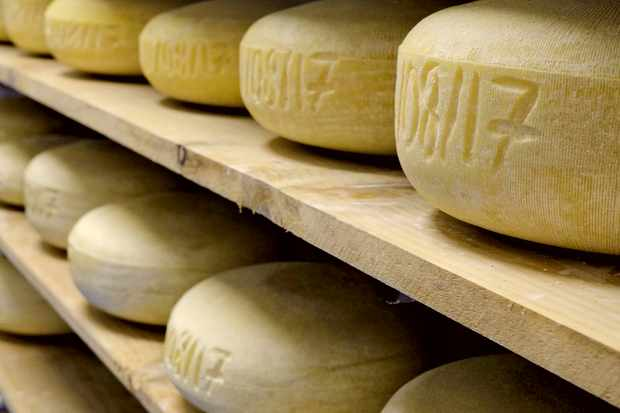 Wooden shelves filled with wheels of cheese
