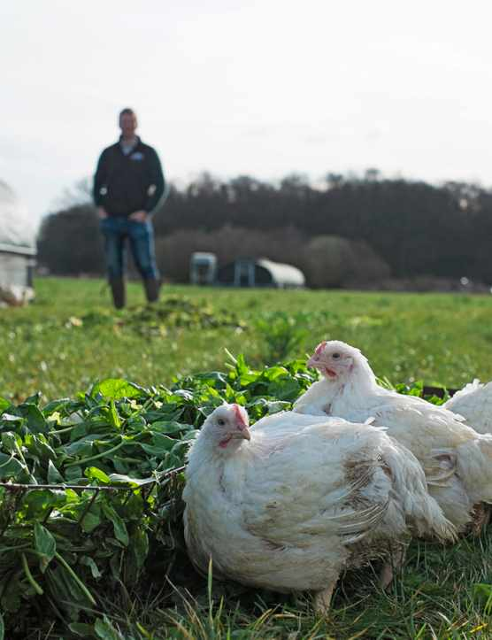 A farm in north Yorkshire with chicken in the foreground and a man in the background
