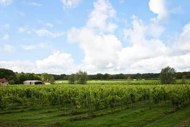 Vineyards in East Sussex