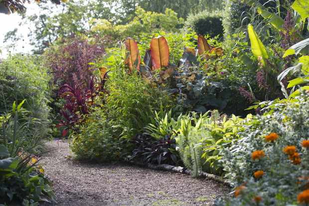 A lush green garden with colourful plants and a gravel path leading through the middle