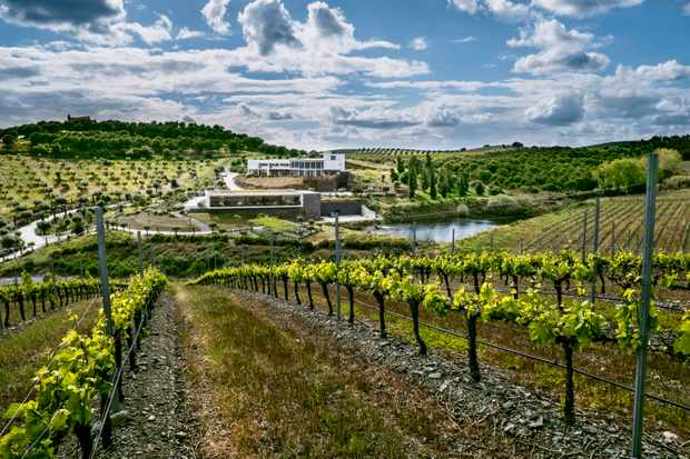 Green rolling vineyards with a striking blue cloudy ski