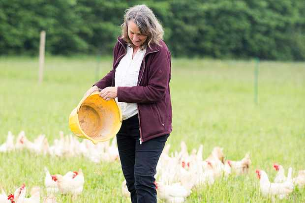 A woman holding a bucket throwing food for chickens