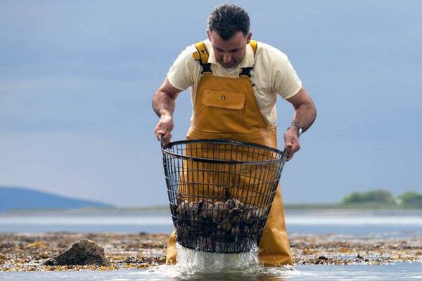 A man in yellow waders pulling oysters from the sea