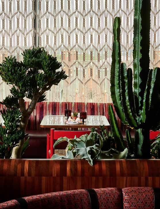 A dining room with large cactus plants and colourful furnishings