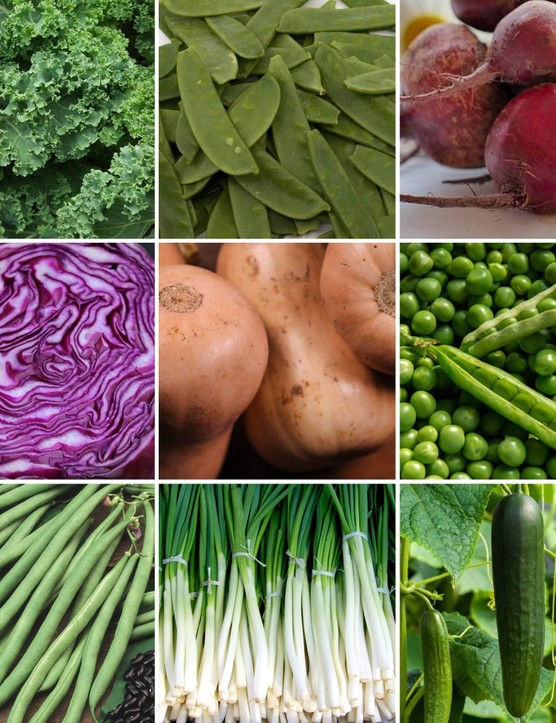 PlantSavers' 'Grow Your Own' Veg Kits