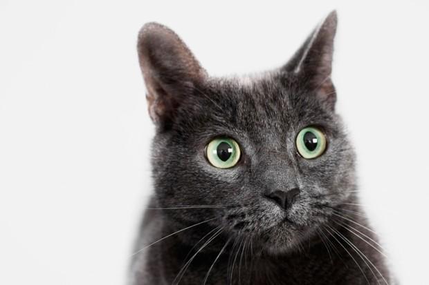Cat-2_0-7d4f470