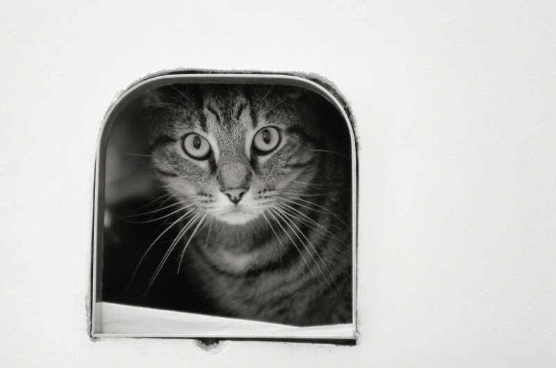 How old is the cat flap? © iStock