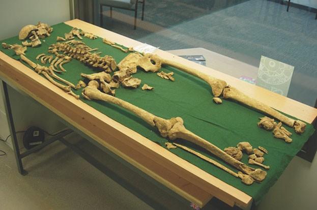 Revealed: Racton Man was Bronze Age warrior chief © The Novium