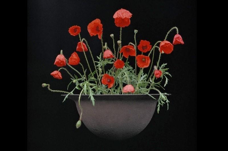 WW1-poppy-2-f62fdc1