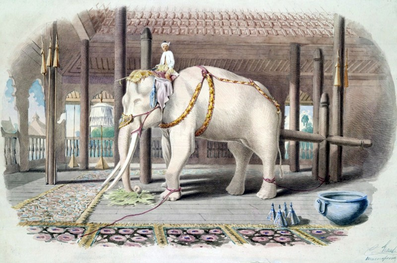 Why we say: 'white elephant' (public domain)