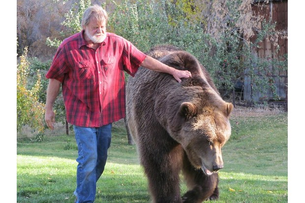 Bart the bear with trainer Doug Seus © Shannon Foley