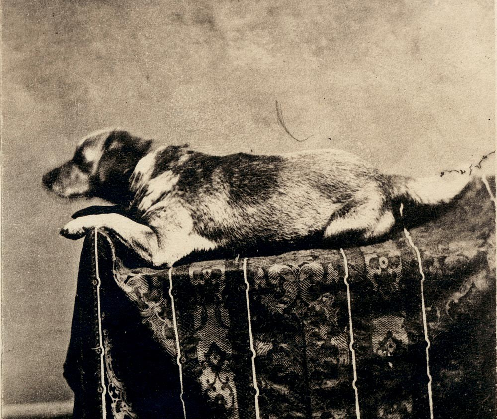 The tragic story of Lincoln's pup © Wikimedia Commons