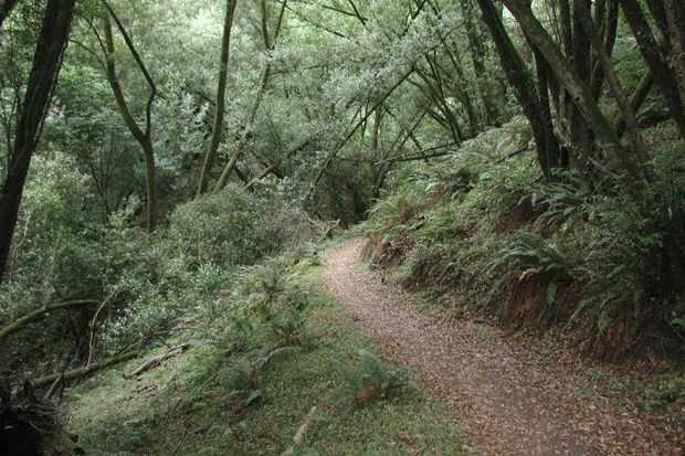 Bill's Trail in Marin County, California.