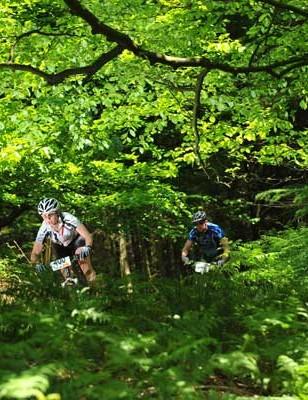 Jenny Copnall through the trees