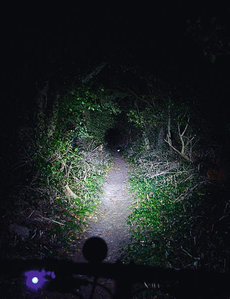 Lupine Beam