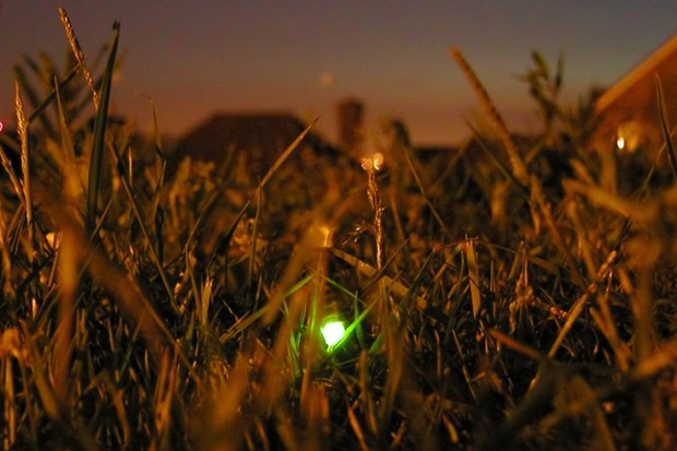 A new cycle path in Tewkesbury has been designed to be glow worm friendly
