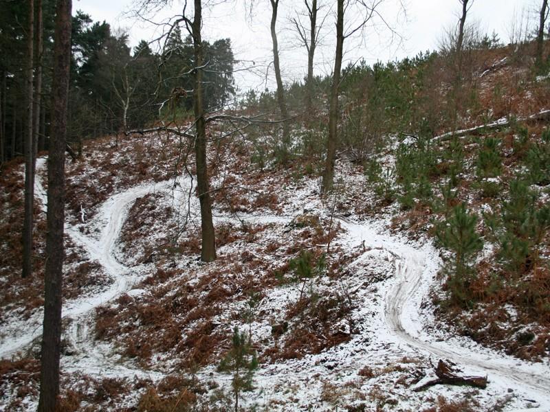 The Monkey Trail