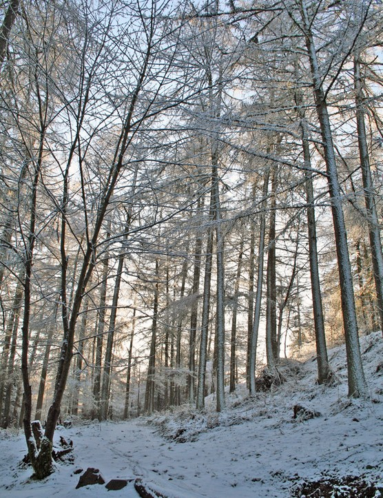 Our testing ground: a snowy Glentress