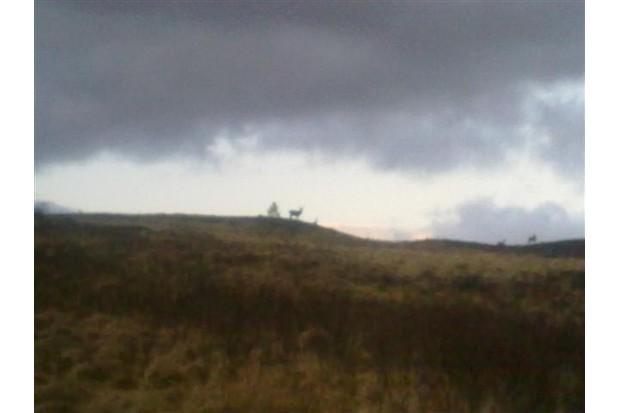 Deer in the distance