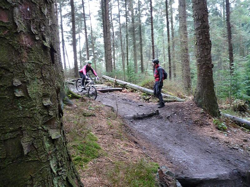 Log drop-off 2