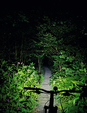 Hope Vision 4 light beam