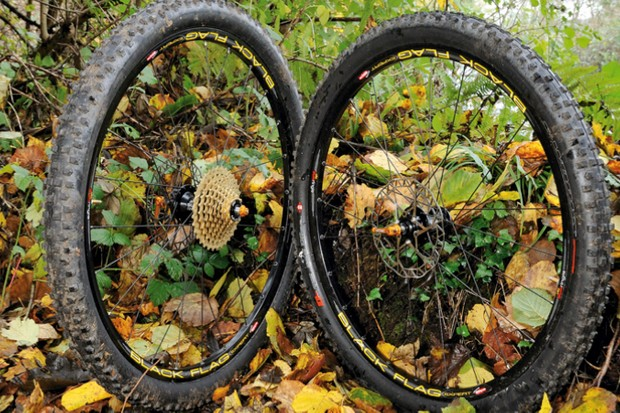An abandoned pair of 26in wheels huddle in the woods, frightened and alone