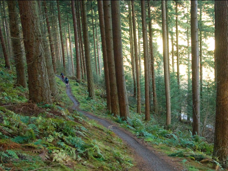 Forestry Commission Scotland say they want to maximise the value of mountain biking to Scotland