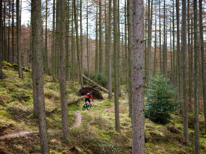 England's forestry estate isn't safe yet, say campaigners