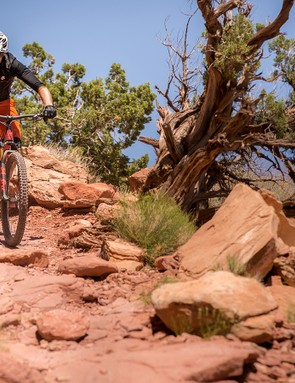 Pivot guided me on trails that normally see all-mountain and enduro bikes on the 120mm travel Trail 429