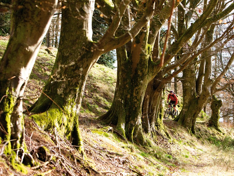 The panel set up in the wake of the UK Government's apparent forestry sell-off U-turn doesn't include any mountain bikers