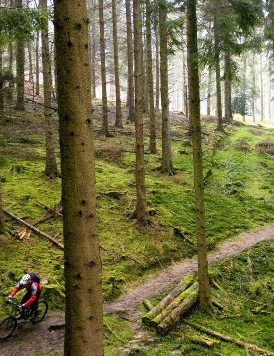 Gethin Woods in Merthyr Tydfil is to be developed into a downhill and freeride centre