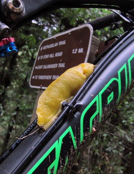 We tested our Santa Cruz Blur TRc on a wide range of trails, including ones in the company's own backyard.  Just in case you're wondering, the banana slug is the mascot of the University of California at Santa Cruz and yes, they're quite slimy