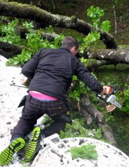A member of Bill's support crew tries to clean up the debris left by a collapsing tree in Fort William, Scotland