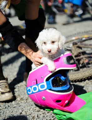 Puppies in helmets. You need this fella as your wingman in Sweden