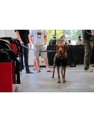 Specialized's headquarters is dog friendly