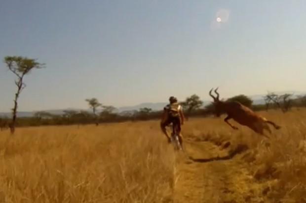 Mountain biker Evan van der Spuy gets taken out by a red hartebeest