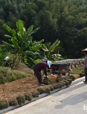 Workers still wear traditional doulis, or rice hats, out in the fields