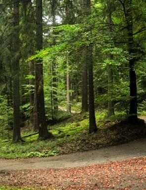 Odenwald forest, Neckar Valley